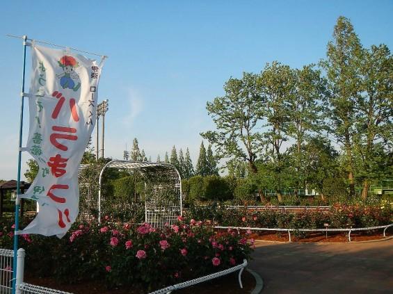 埼玉県のバラ園 バラまつり 伊奈町制施行記念公園 DSCN4421