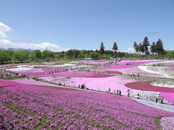 20140502 埼玉県秩父市羊山公園の芝桜DSCF1134