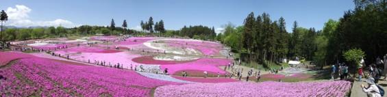 20140502 埼玉県秩父市羊山公園の芝桜DSCF1136