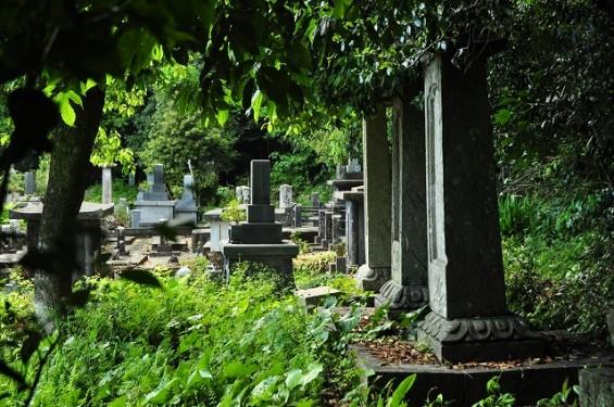 長宗我部信親(元親の長子)のお墓参りに雪蹊寺にDSC_0490