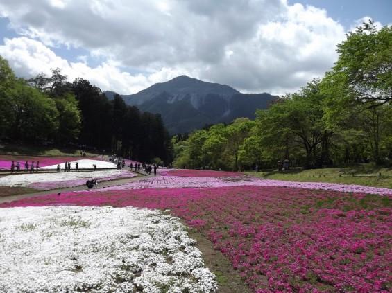 20140502 埼玉県秩父市羊山公園の芝桜DSCF1150