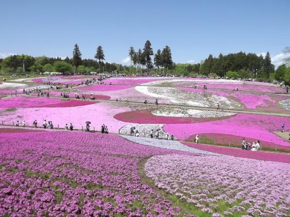 20140502 埼玉県秩父市羊山公園の芝桜DSCF1132
