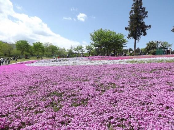 20140502 埼玉県秩父市羊山公園の芝桜DSCF1154