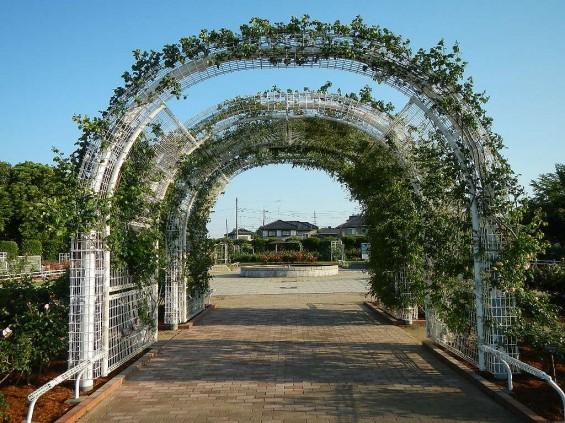 埼玉県のバラ園 バラまつり 伊奈町制施行記念公園 DSCN4376
