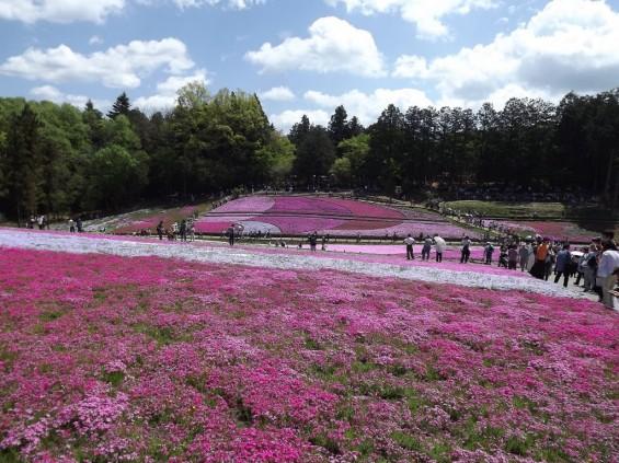 20140502 埼玉県秩父市羊山公園の芝桜DSCF1156