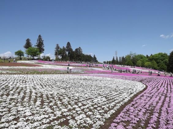 20140502 埼玉県秩父市羊山公園の芝桜DSCF1143