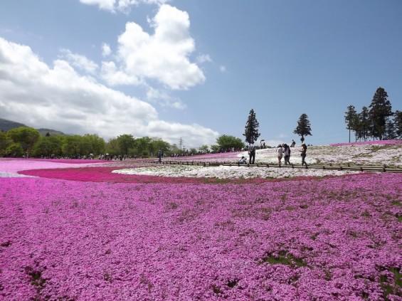 20140502 埼玉県秩父市羊山公園の芝桜DSCF1165