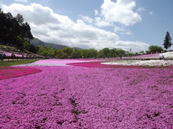 20140502 埼玉県秩父市羊山公園の芝桜DSCF1164