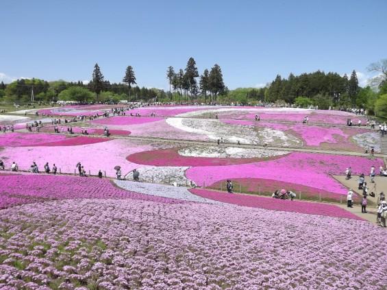 20140502 埼玉県秩父市羊山公園の芝桜DSCF1131