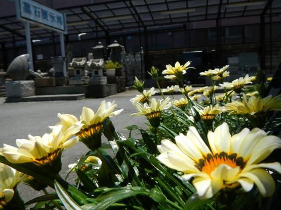 大塚 墓石展示場の植物 DSCN4476
