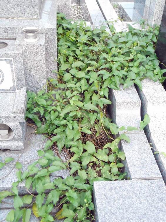 お墓に雑草は生えていませんか?防草シートと、新しい玉砂利で気持ち良いお墓参りをDSCN0836