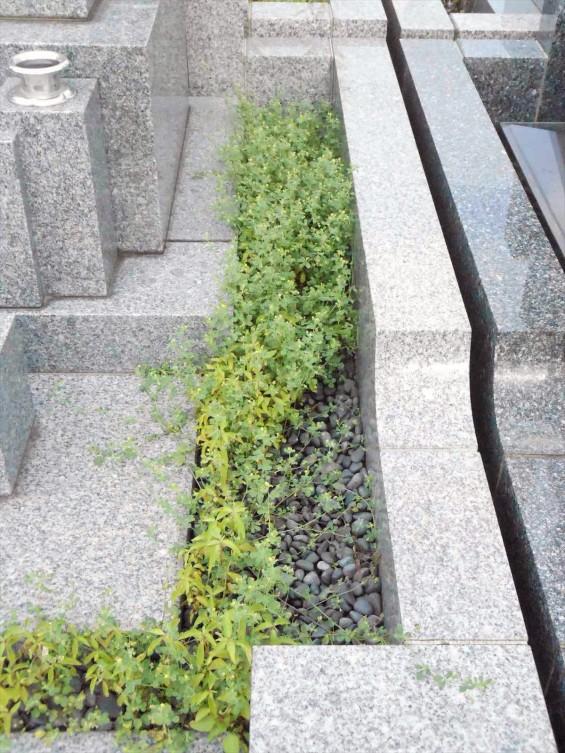 お墓に雑草は生えていませんか?防草シートと、新しい玉砂利で気持ち良いお墓参りをDSCN0838