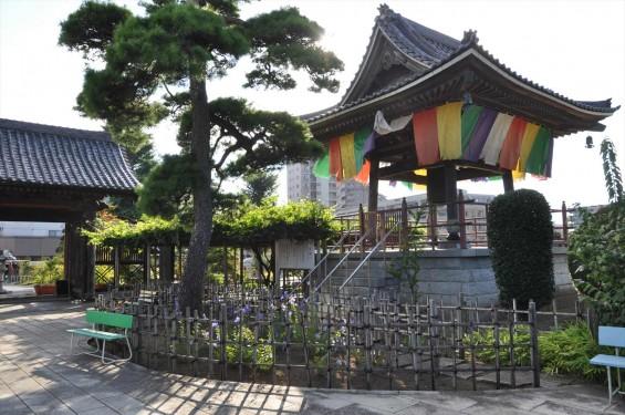 埼玉県上尾市 遍照院DSC_0066山門と鐘楼と藤棚と桔梗