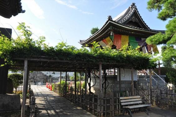 埼玉県上尾市 遍照院DSC_0057藤棚と鐘楼