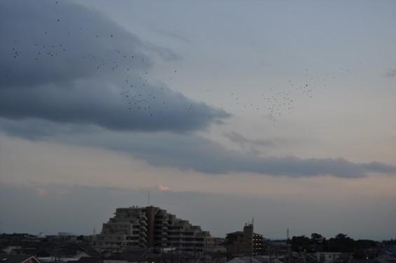 20140913 2014年9月13日の埼玉県上尾市から見えた日没後のムクドリDSC_0116