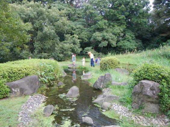 20140906 岩槻公園にいる 野生のカワセミに会いましたDSCN5350+
