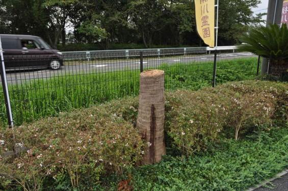 20140911 埼玉県 桶川霊園DSC_0055