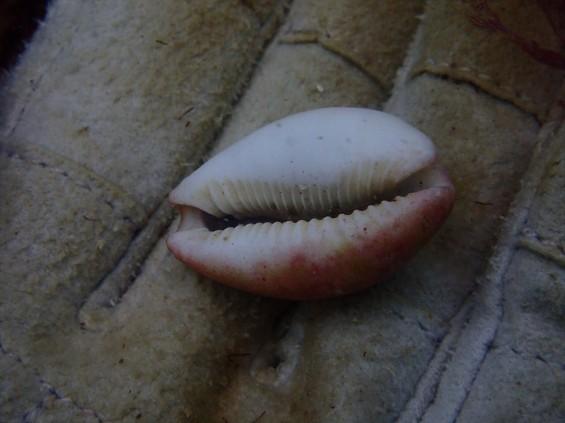 伊豆の城ヶ崎でダイビングをしてきましたIMG_4542[1]