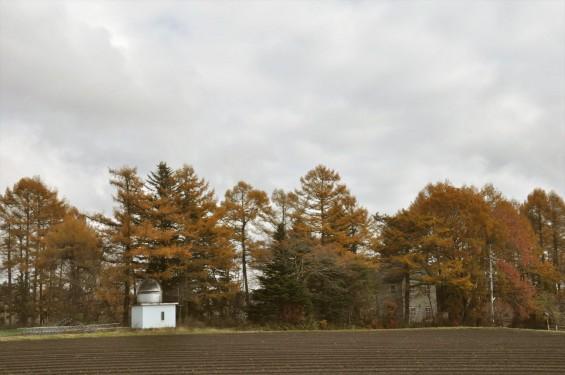 黄色のきれいな紅葉 軽井沢 天文台DSC_0056