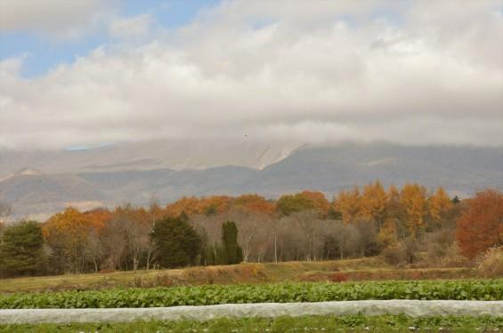 黄色のきれいな紅葉 浅間山と麓DSC_0058