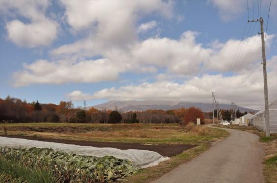 黄色のきれいな紅葉 浅間山と麓DSC_0059