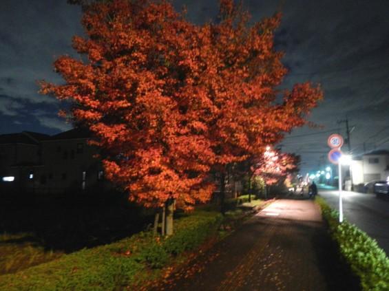 夜のモミジ 紅葉 赤いDSCN6269