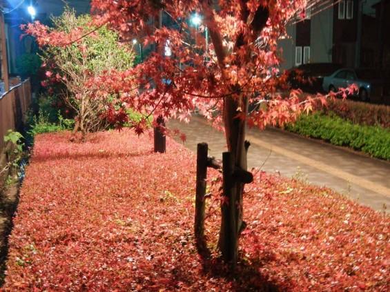 夜のモミジ 紅葉 赤いDSCN6280