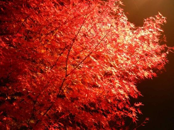 夜のモミジ 紅葉 赤いDSCN6256