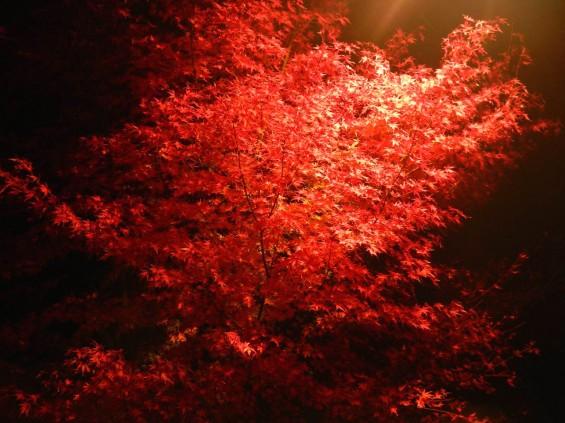 夜のモミジ 紅葉 赤いDSCN6264