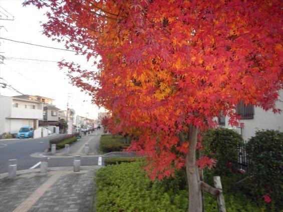 夜のモミジ 紅葉 赤いDSCN6374