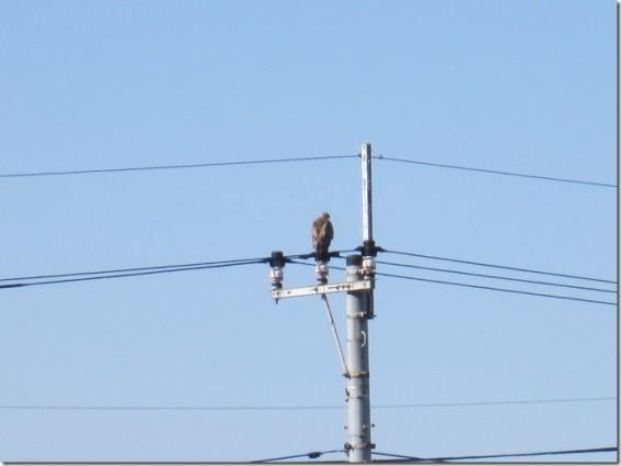 埼玉県桶川市 桶川霊園の広い駐車場 大きな鳥