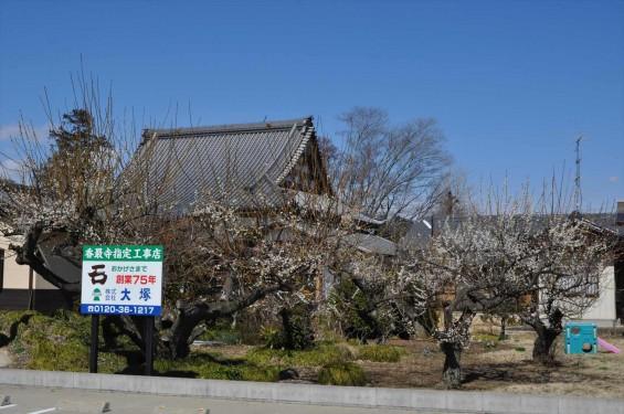 20150312 埼玉県久喜市 香最寺の梅が間もなく満開DSC_0021