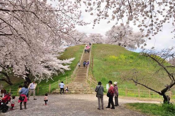 2014年4月4日 さきたま古墳の桜DSC_0077