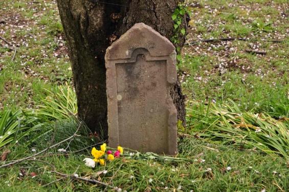 2014年4月4日 さきたま古墳の桜DSC_0295