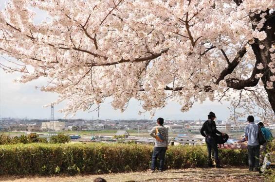 2014年4月4日 さきたま古墳の桜DSC_0113