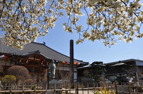 20150325 埼玉県上尾市 遍照院 モクレンの花 木蓮の花DSC_0030-