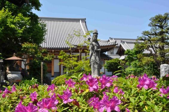 2015年5月10日 埼玉県上尾市瓦葺 楞厳寺のシャクナゲとオオムラサキツツジDSC_0222