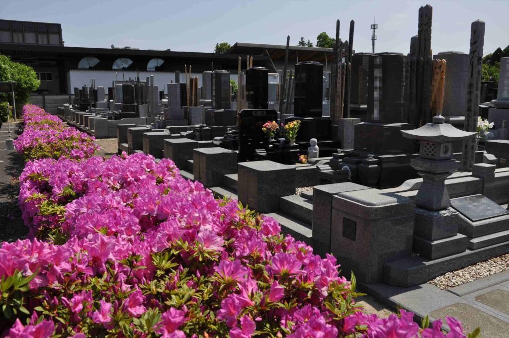2015年5月10日 埼玉県上尾市瓦葺 楞厳寺のシャクナゲとオオムラサキツツジDSC_0317