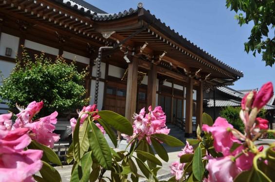 2015年5月10日 埼玉県上尾市瓦葺 楞厳寺のシャクナゲとオオムラサキツツジDSC_0194
