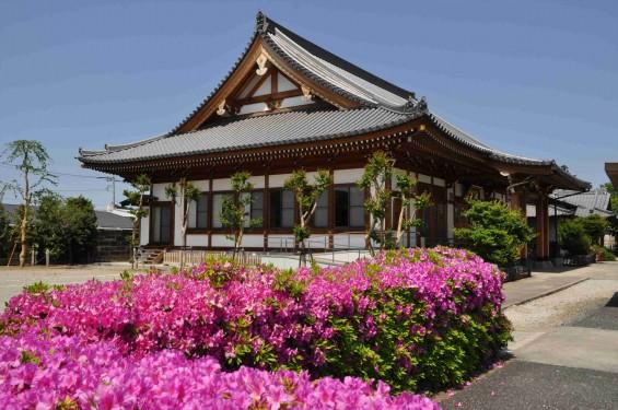 2015年5月10日 埼玉県上尾市瓦葺 楞厳寺のシャクナゲとオオムラサキツツジDSC_0318