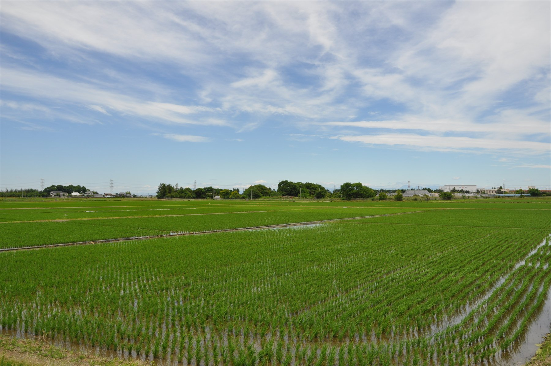 ・埼玉県久喜市 田んぼと白鷺   霊園とお墓のはなし
