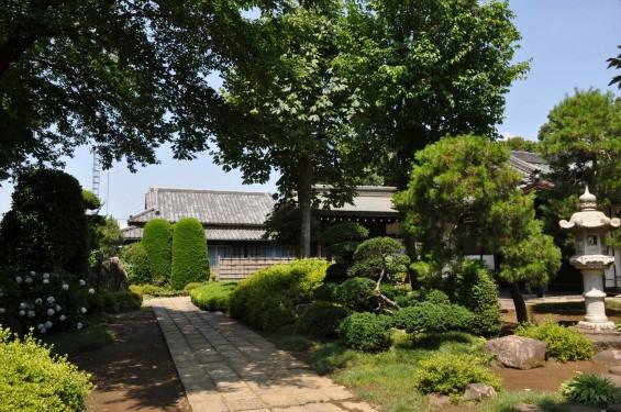 2015年6月24日 埼玉県伊奈町の寺院 法光寺DSC_1639