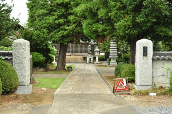 埼玉県蓮田市 星久院の白いさるすべりDSC_3146