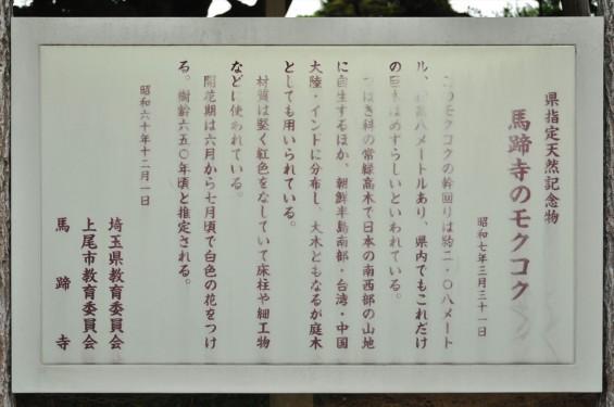2015年 上尾市 馬蹄寺のモクコク 埼玉県指定天然記念物DSC_3341-