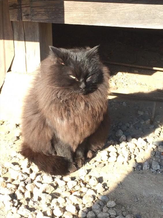 2015年9月 久喜清久霊園開園 東明寺の猫の鈴ちゃん写真 2015-02-14 15 02 17