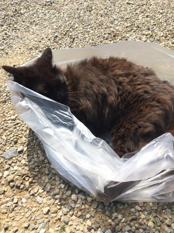 2015年9月 久喜清久霊園開園 東明寺の猫の鈴ちゃん写真 2015-05-23 14 38 48