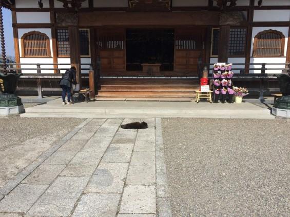 2015年9月 久喜清久霊園開園 東明寺の猫の鈴ちゃん写真 2015-03-21 13 45 12