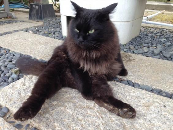 2015年9月 久喜清久霊園開園 東明寺の猫の鈴ちゃん写真 2013-10-19 10 17 44