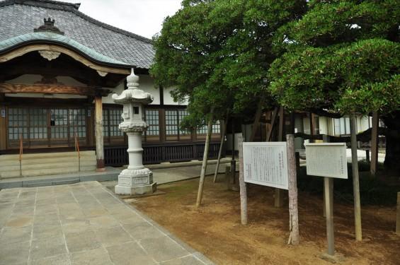 2015年 上尾市 馬蹄寺のモクコク 埼玉県指定天然記念物DSC_3339