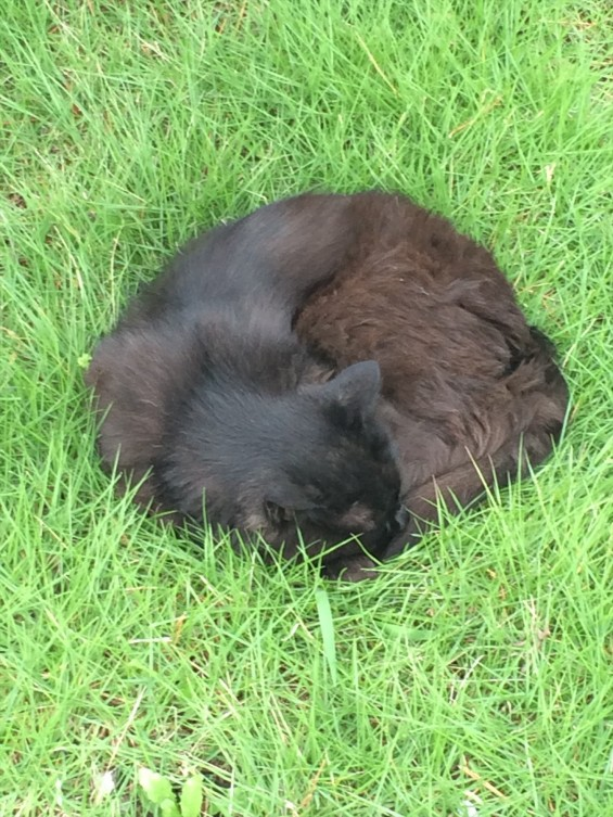 2015年9月 久喜清久霊園開園 東明寺の猫の鈴ちゃん写真 2015-07-05 11 38 53